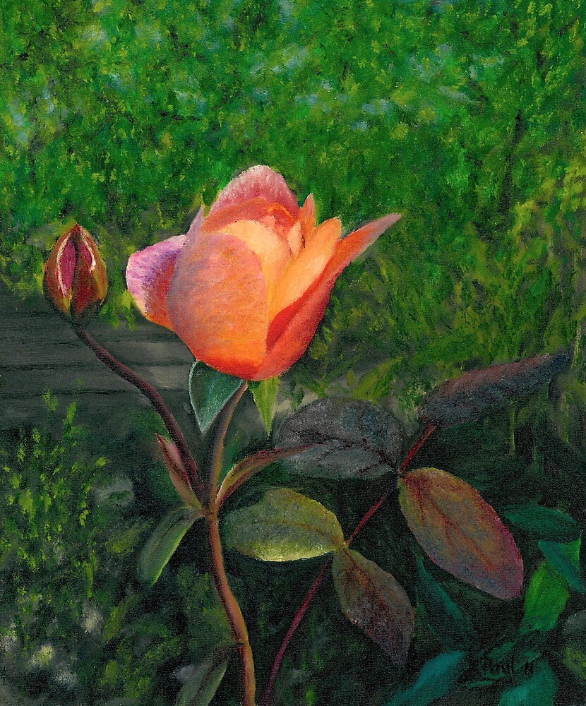 Garden Rose by Richard Paul