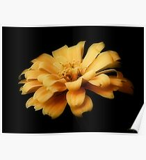 A Pretty Yellow Flower  Poster