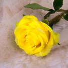 Charming Yellow Rose by daphsam
