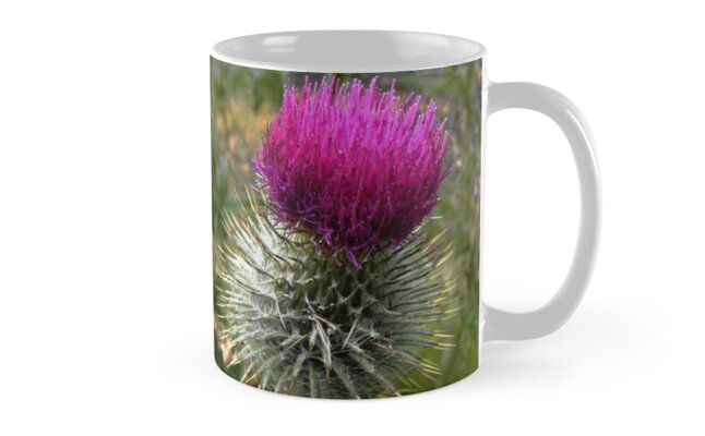 Scottish Thistle by Forfarlass