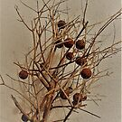 Rusted Baubles On A Branch by Fara