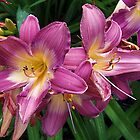 Flashy Lilies by Monnie Ryan