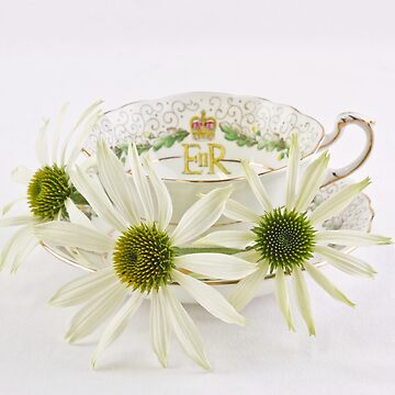 Three White Coneflowers by SandraFoster