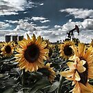 Sunflower OilField by Angela E.L. Clements
