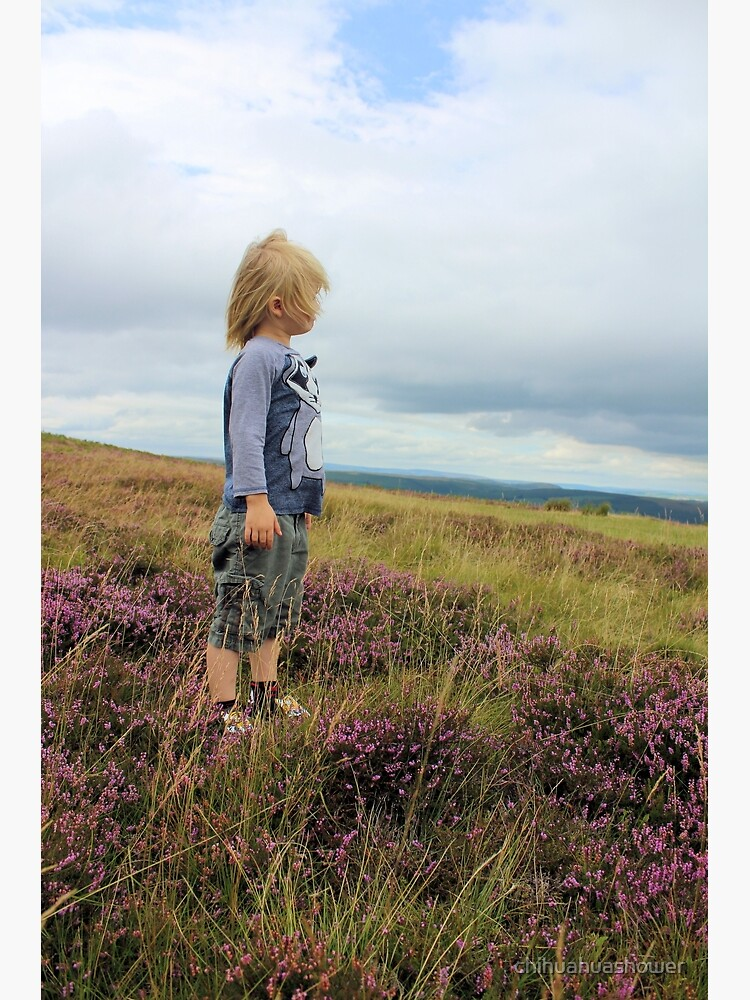 Looking out over the heather by chihuahuashower