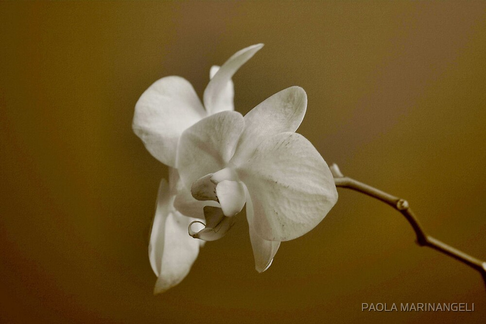 Orchids in monochrome Sepia by PAOLA MARINANGELI
