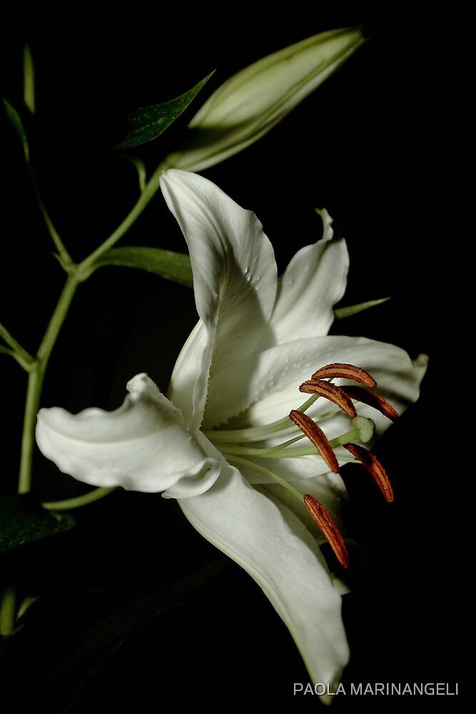 White Lilium by PAOLA MARINANGELI