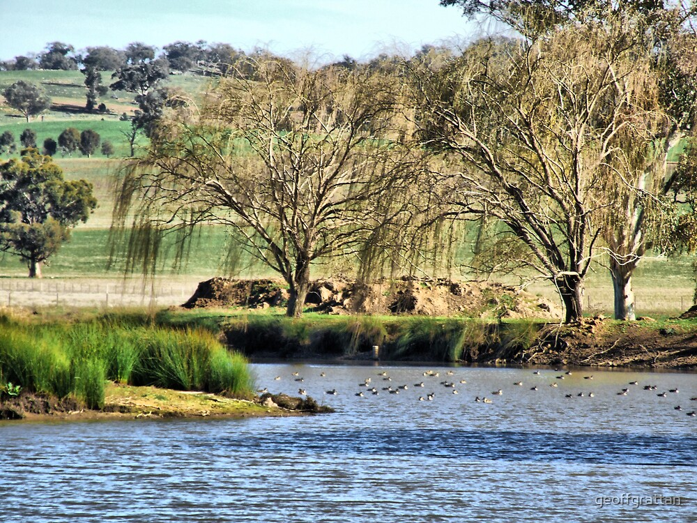 ducks on the water by geoffgrattan