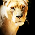 The Lioness by Mark Moskvitch