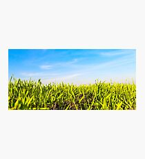 Grass and Blue Sky Photographic Print
