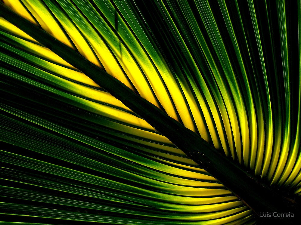 Lighted Palm by Luis Correia