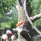 Birds at the zoo by mpeakclewett