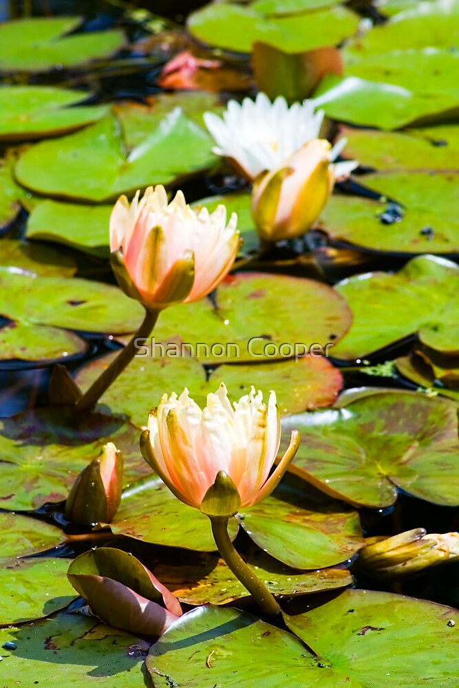 Ladies on the Lilypads by Shannon Beauford