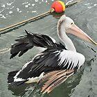 Dancing Pelican by Margaret Stevens