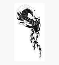 Avian Osteology Big Photographic Print