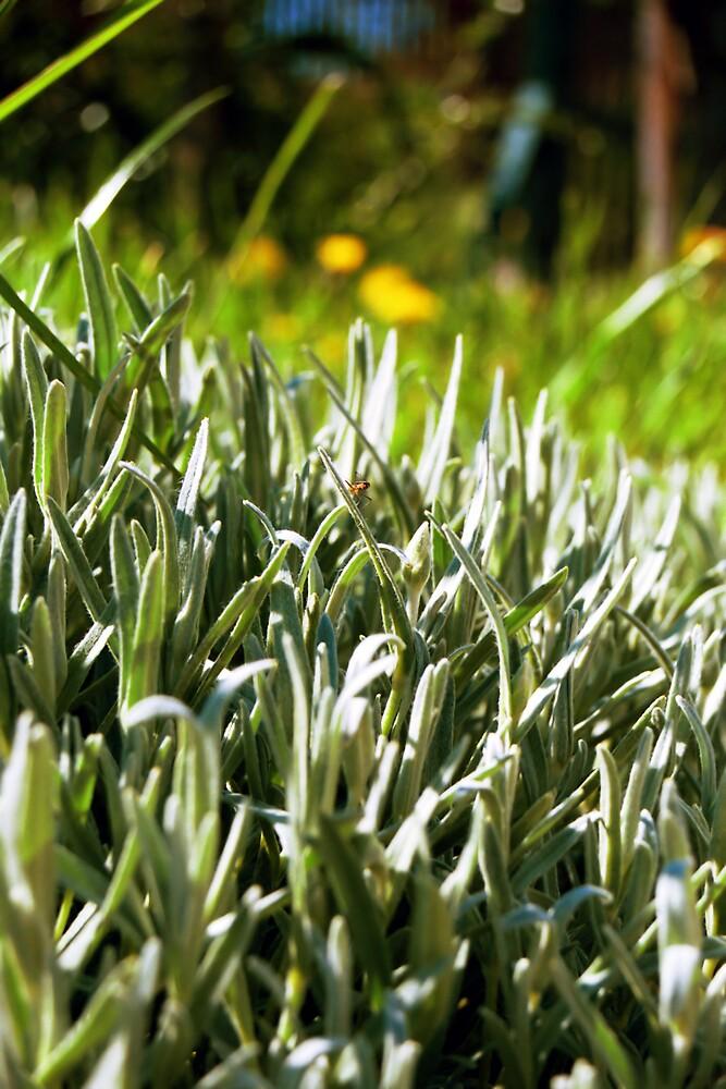 bug on the grass by muzanike