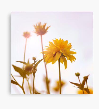 yellow pom-pom Canvas Print