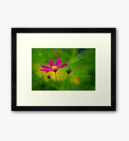 Enchanted Garden Framed Print