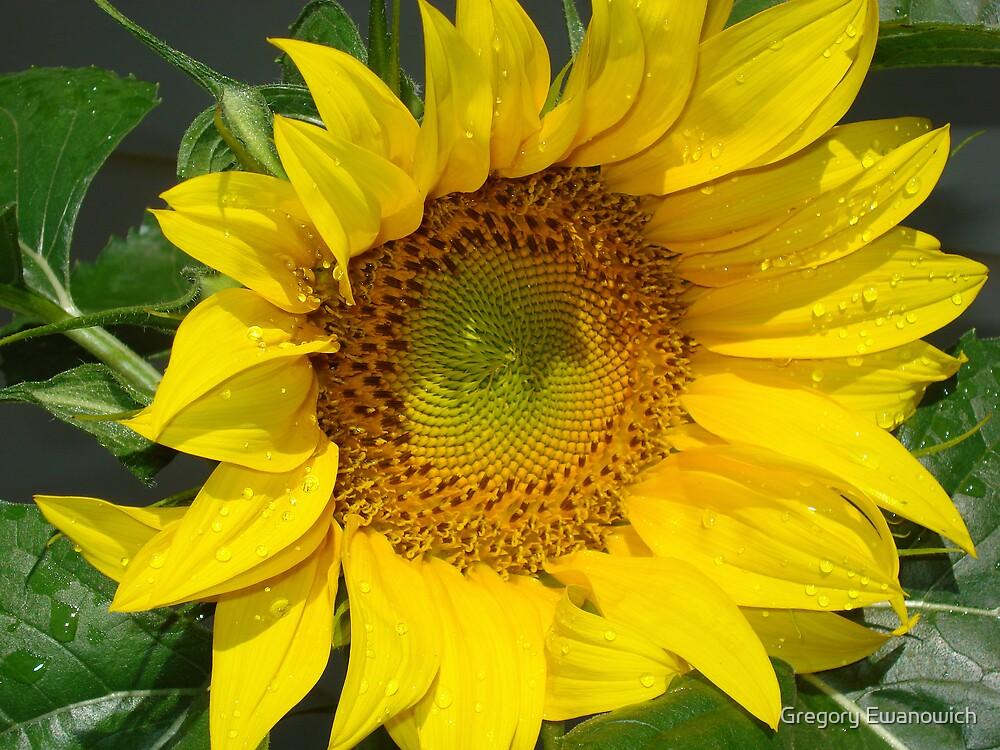 Sunflower by Gregory Ewanowich