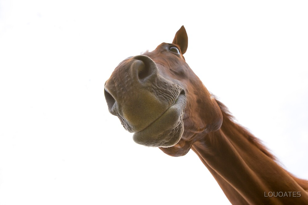 Horse nose by LOUOATES