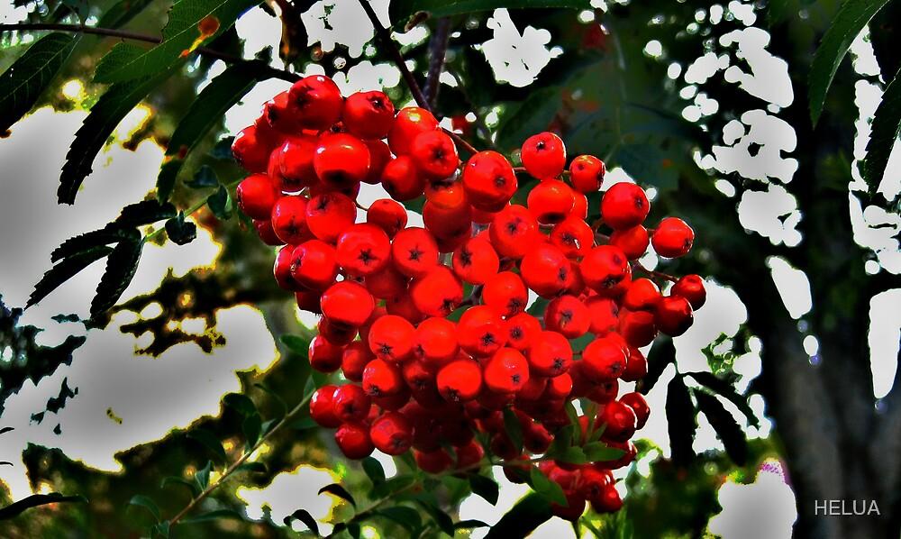 RowanberriesGetting Red by HELUA