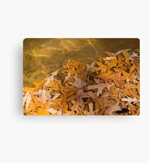 Floating Chaos - Fallen Oak Leaves in the Fountain Canvas Print