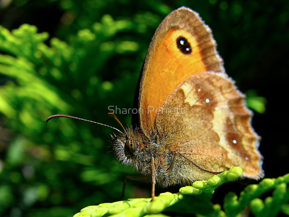 Beauty is in the eye of the beholder by Sharon Perrett