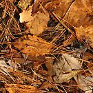 Autumn Canvas by Patricia Montgomery