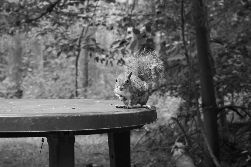 Squirrel by Justine McCreith