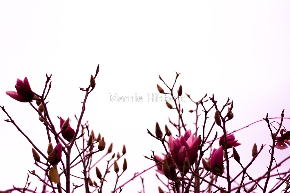 Nature in Pink by Marnie Hibbert