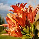 Tiger Lily 1 by Pamela Hubbard