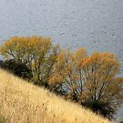Grass, Willows, Water by coffeebean