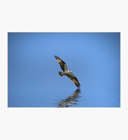 Osprey with Fish Photographic Print