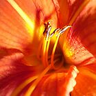 Day Lily by trish725
