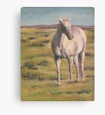 Montana Mare Canvas Print