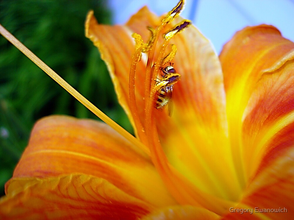 Beauty And The Bee by Gregory Ewanowich
