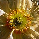 poppy IV by Floralynne