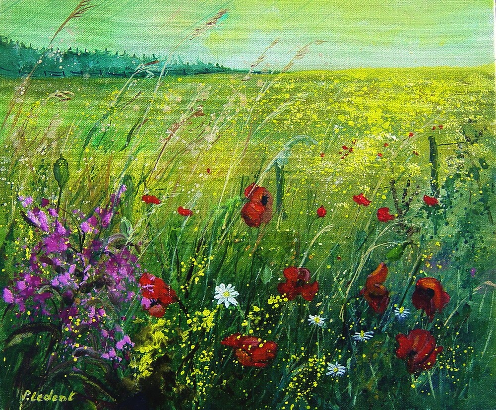 red poppies 56 by calimero