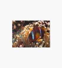 Ägypten Egypt Nemo Anemone Clown Fish Red Sea Rotes Meer Art Board