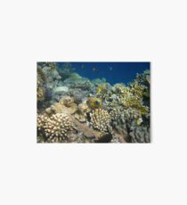 Ägypten Egypt Nemo Anemone Clown Fish Red Sea Rotes Meer Corals Korallen Art Board