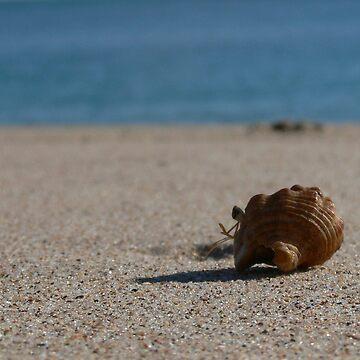 Lone Crab by HoustonB