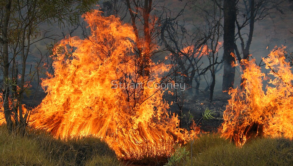 Spot Fire by Stuart Cooney