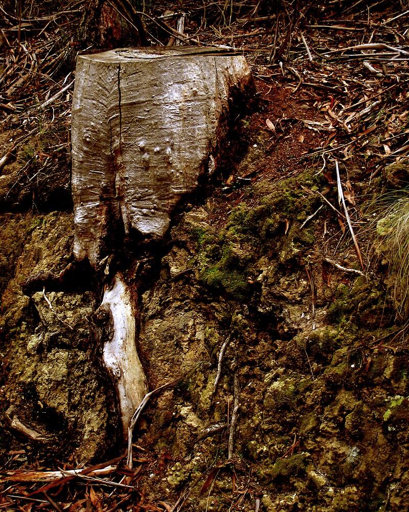 Stump IV by Daz Zammit