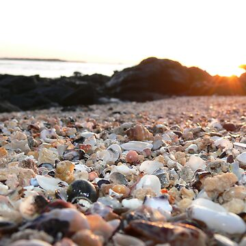 Shells at Sunset by HoustonB