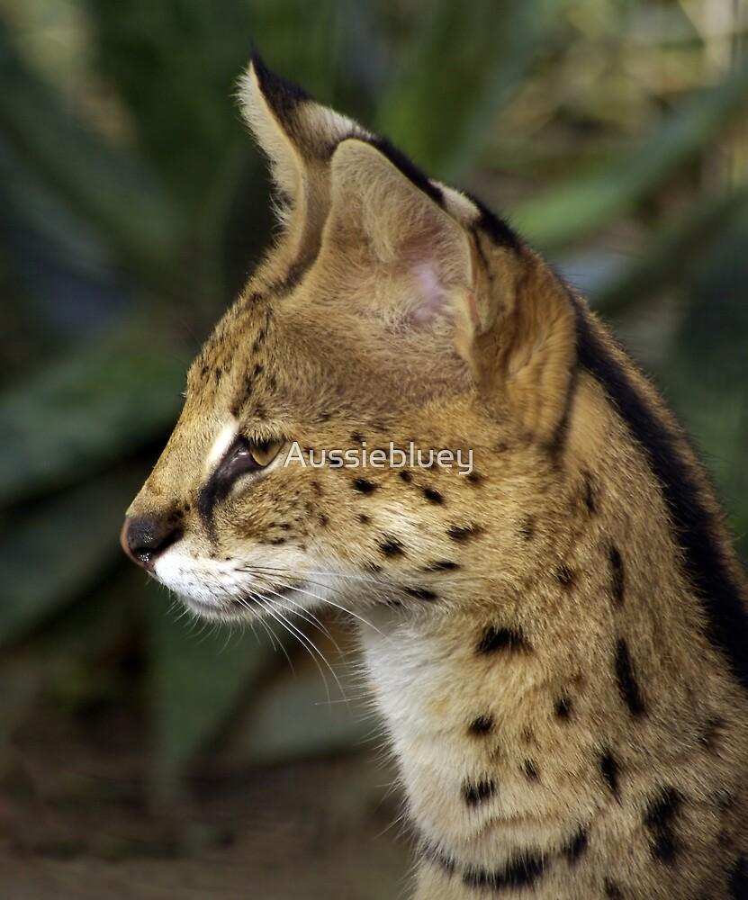 Serval by Aussiebluey