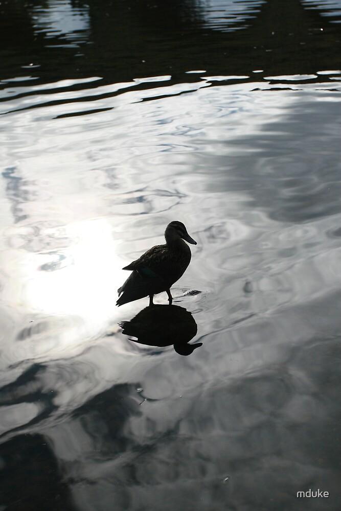 Duck in water by Matthew Duke