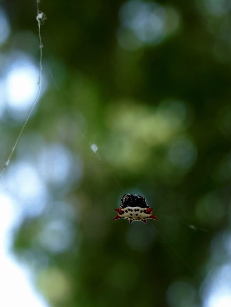 Strange Spider by Hannah Grubb