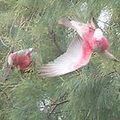 Making a Galah of Themselves # 2 by Craig Watson