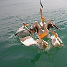 Feedtime at the home of the Pelicans by Wild at Heart Namibia