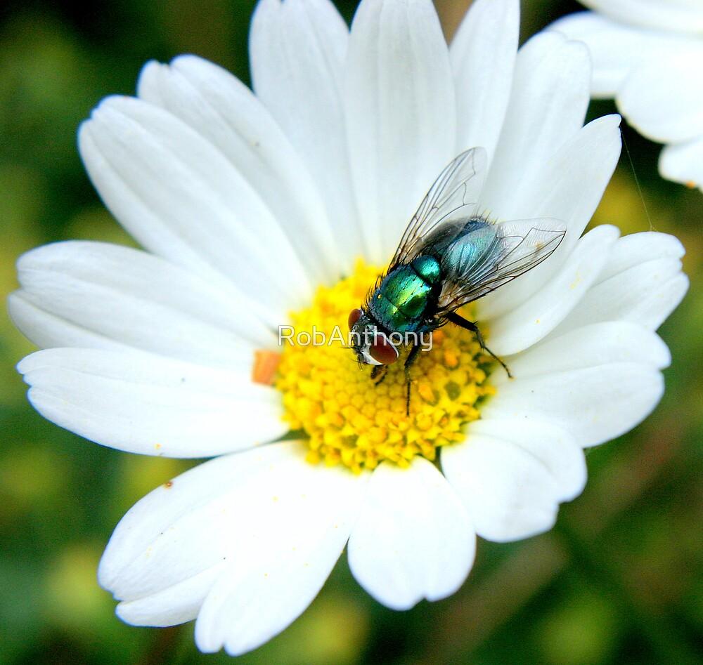 Garden Fly by RobAnthony